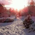 Talvekool 25. 02.2011